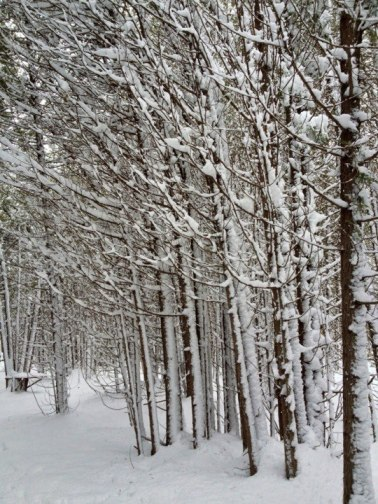 Snowy sentinels